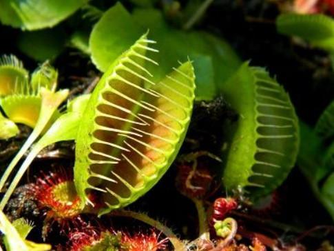 bitkiler nasıl beslenir